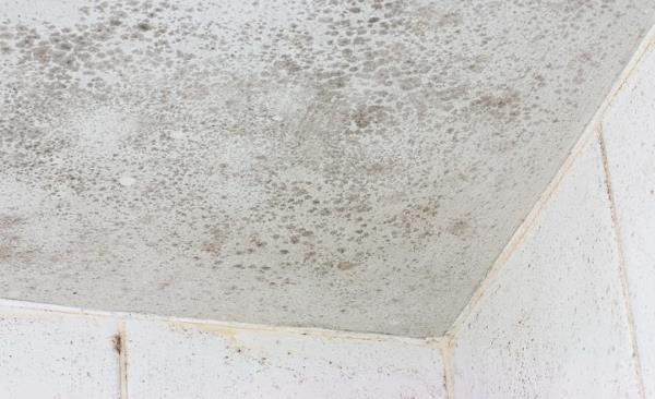 Mold Remediation by Quick 2 Dry LLC